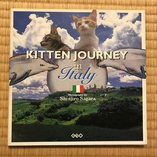 Kitten journey in Italy(アート/エンタメ)