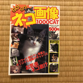 Go! go!ネコ画像1000 cat お気楽ネコ楽(アート/エンタメ)