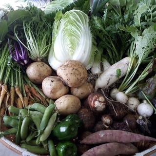 お任せ野菜詰め合わせ60サイズ♡(7種類~8種類)(野菜)