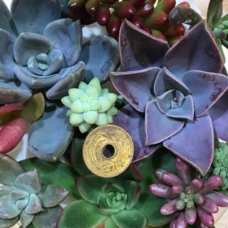 専用‼️多肉植物 寄せ植えセット&月花美人葉挿しおまとめ(その他)