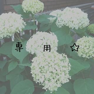 スタージュエリー(STAR JEWELRY)の☆専用ページです☆(リング(指輪))