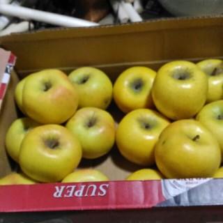 規格外 りんご ぐんま名月 シナノゴールド 箱込み5kg(フルーツ)