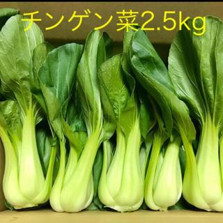 新鮮なチンゲン菜➕きゅうり5本(野菜)
