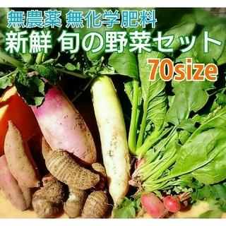 無農薬❗新鮮野菜セット(70サイズ) じゃがいもも収穫開始~ 長崎県五島列島産(野菜)
