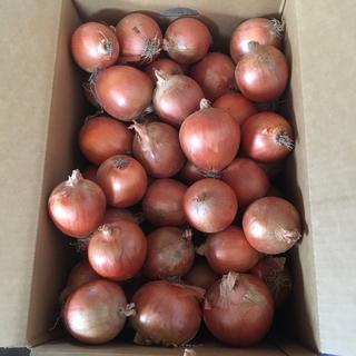 20キロ 北海道産 減農薬 玉ねぎ(野菜)