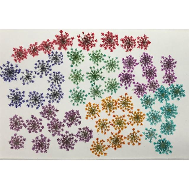 押し花 素材 レースフラワー 7色MIX ハンドメイドのフラワー/ガーデン(ドライフラワー)の商品写真