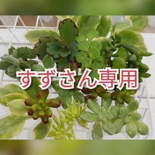 多肉植物8種類(その他)
