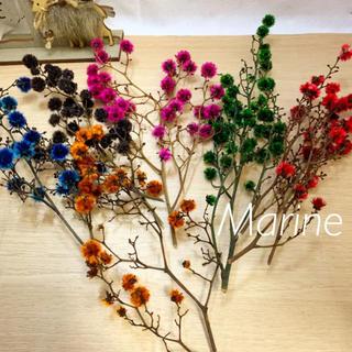 スターリンジャー ドライフラワー クリスマス花材 ハーバリウム(ドライフラワー)