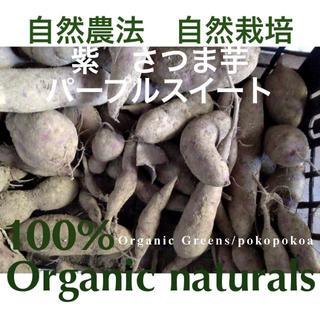 サツマイモ パープルスイート 完全無農薬無化学肥料有機栽培 自然農法畑(野菜)