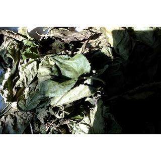 桑 葉 茶 乾燥済み 天然 オーガニック 自然栽培畑(茶)