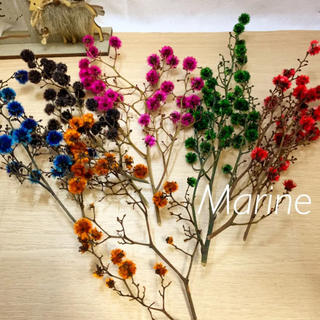 クリスマス花材 スターリンジャー ドライフラワー 6カラー (ドライフラワー)