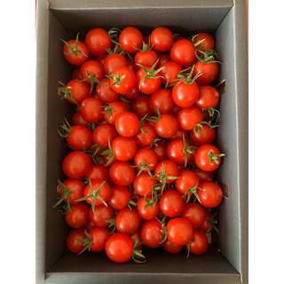 熊本県 完熟濃厚ミニトマト500g  ☆キャロルセブン☆ 農家直送(野菜)