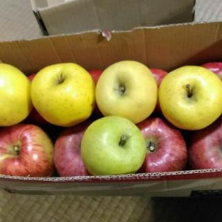 りんご 箱込み 5kg(フルーツ)