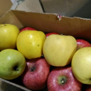 りんご 詰め合わせ 箱込み5kg(フルーツ)