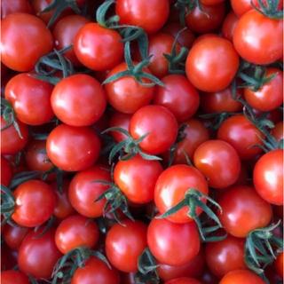 キャロルパッション ミニトマト 1キロ(野菜)
