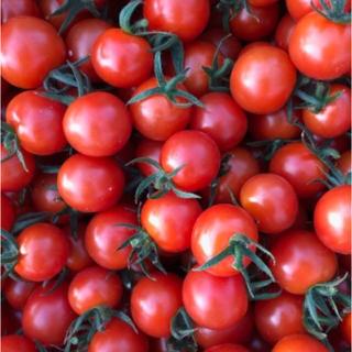 キャロルパッション ミニトマト 2キロ(野菜)