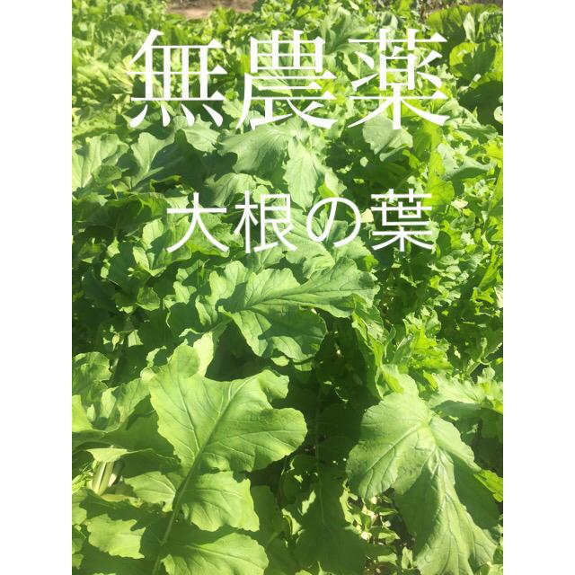 無農薬 大根の葉 食品/飲料/酒の食品(野菜)の商品写真