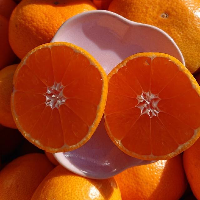 ◆数量限定!◆  ★★和歌山県産★★有田みかん  早生 5㎏★★ 食品/飲料/酒の食品(フルーツ)の商品写真