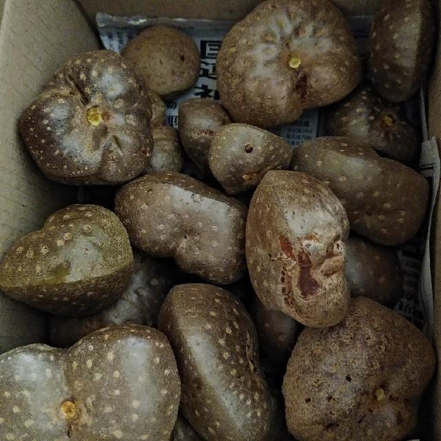 宇宙芋 エアーポテト 食品/飲料/酒の食品(野菜)の商品写真