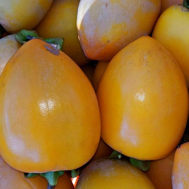 渋柿10㌔ 送料無料 食品/飲料/酒の食品(フルーツ)の商品写真