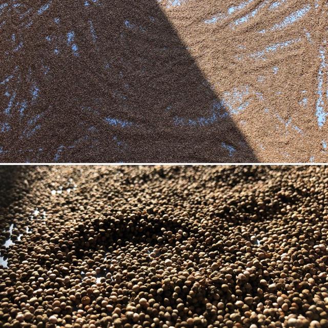 「自然栽培」エゴマの実 約200g 食品/飲料/酒の食品(野菜)の商品写真