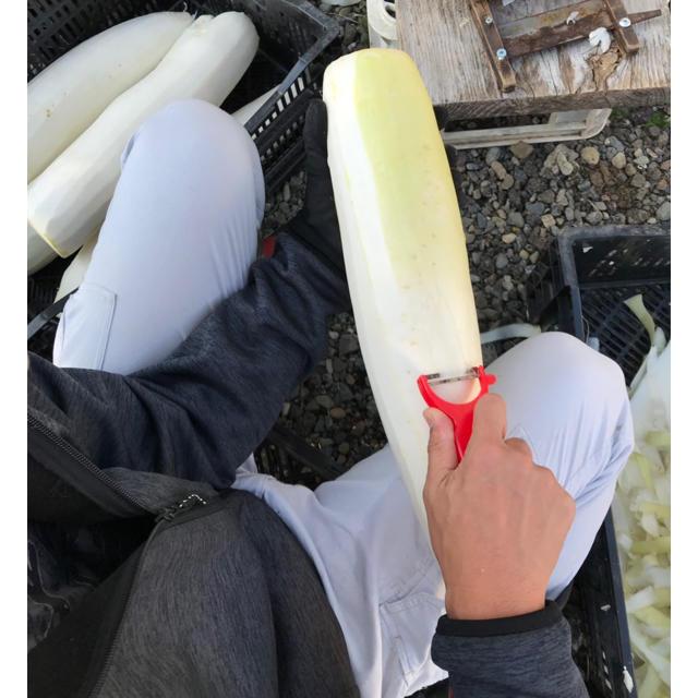 宮崎産の割り干し大根 切り干し大根 千切り大根 食品/飲料/酒の食品(野菜)の商品写真