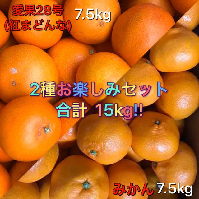 みかん 愛果28号 紅まどんな 2種セット 15kg 訳あり 送料込み 食品/飲料/酒の食品(フルーツ)の商品写真