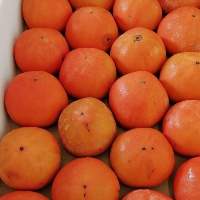 数量限定!福岡県産 富有柿 甘柿 4キロ以上 食品/飲料/酒の食品(フルーツ)の商品写真
