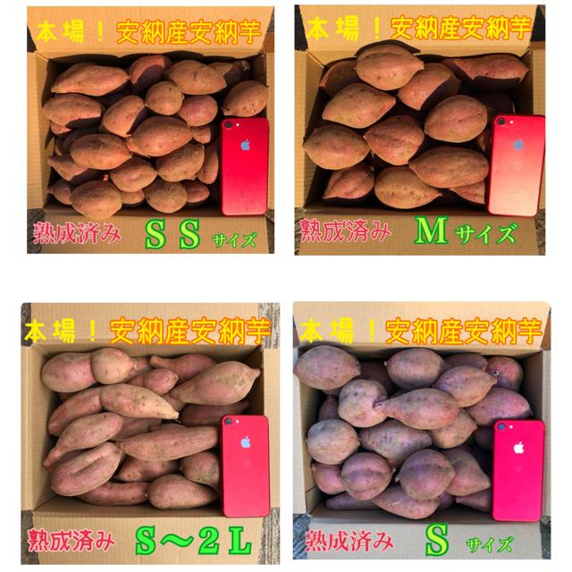 本場!熟成済み安納芋 5.5kg 食品/飲料/酒の食品(野菜)の商品写真