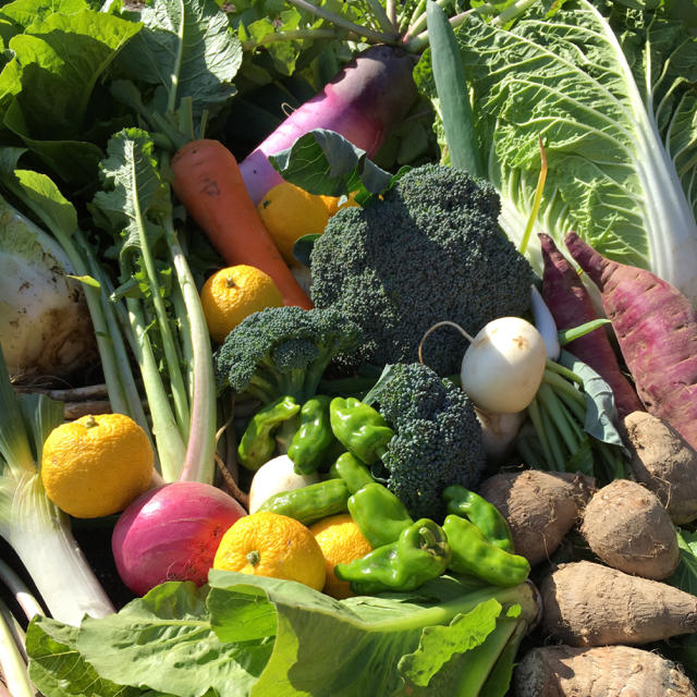 野菜BOX Mサイズ 食品/飲料/酒の食品(野菜)の商品写真