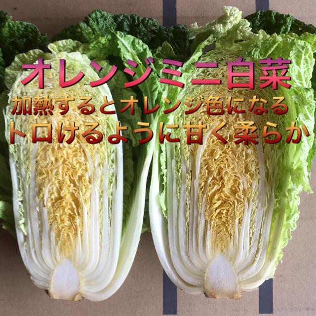 野菜BOX Sサイズ 食品/飲料/酒の食品(野菜)の商品写真