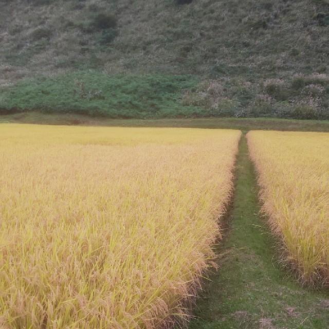 令和元年度南魚沼産コシヒカリ中粒米 精米20kg 20kg最終 食品/飲料/酒の食品(米/穀物)の商品写真