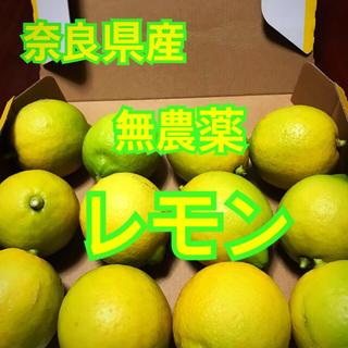 奈良県産 無農薬 レモン(フルーツ)