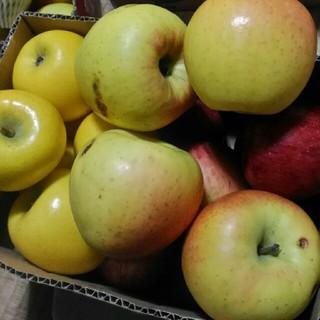 規格外 サンフジ シナノゴールド りんご 箱込み5kg(フルーツ)