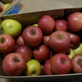 規格外 りんご 箱込み10kg(フルーツ)