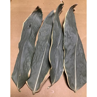 お試し 天然 クマザサ 熊笹 クマ笹 乾燥葉 ドライ 郵送 完全無農薬無肥料 (健康茶)
