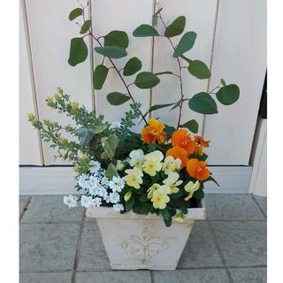 白いプラ鉢の寄せ植え(その他)