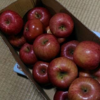 規格外 りんご サンフジ 箱込み5kg(フルーツ)