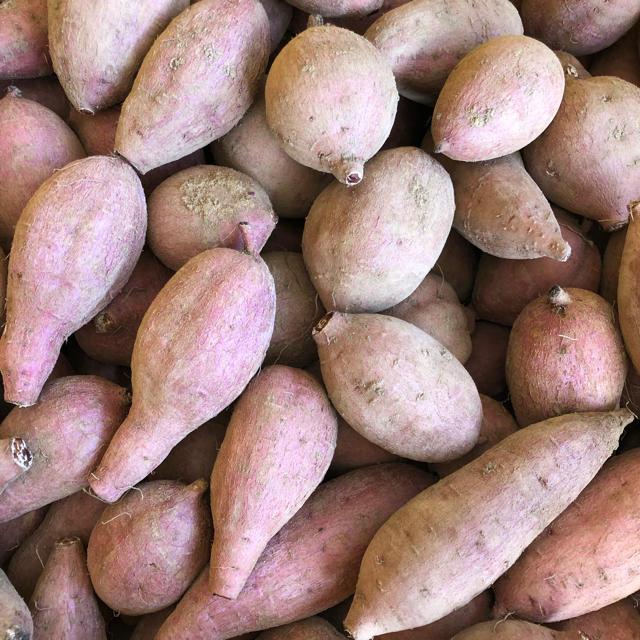 本場!熟成済み安納芋 S  5.5kg  A級品 食品/飲料/酒の食品(野菜)の商品写真