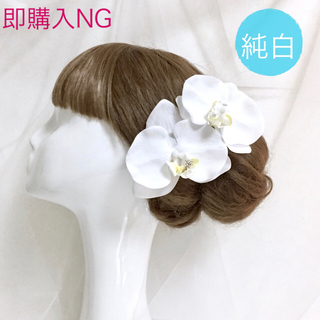白雪の胡蝶蘭 2輪
