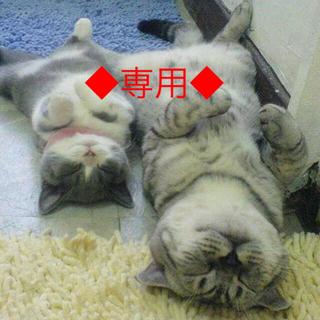 フェース ラメラモード クレンジングとクレイゲルウォッシュ&パックの2点セット★(クレンジング / メイク落とし)