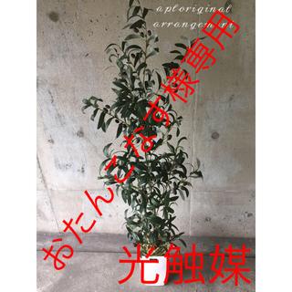 光触媒 人工観葉植物 オリーブ14250