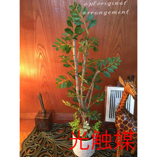 光触媒 人工観葉植物 トネリコ7230