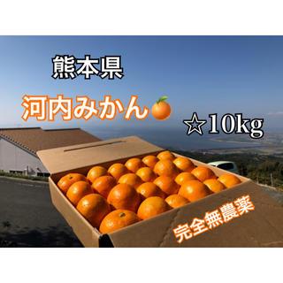 熊本県 河内みかん 10kg  ☆完全無農薬☆農家直送(フルーツ)