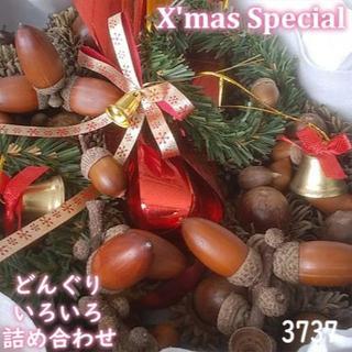 森のどんぐり クリスマス スペシャルBOX 3737(その他)