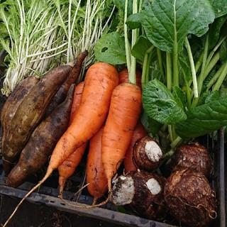オーガニック畑の野菜の紹介(野菜)