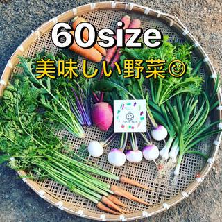 【60サイズ】渥美半島から直送!旬彩野菜バスケット(野菜)