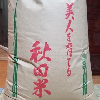 新米 秋田県産ササニシキ 10kg