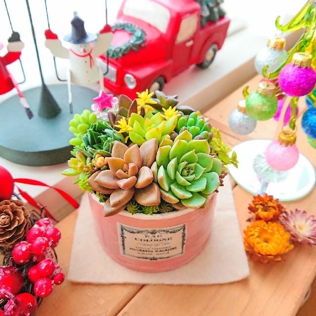 CHANEL様おまとめ■ 多肉寄せ植え ピンクベージュリメ鉢×アンティークラベル ハンドメイドのフラワー/ガーデン(その他)の商品写真