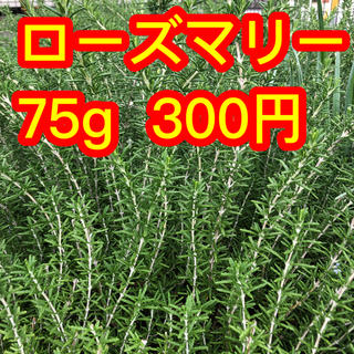 ローズマリー❤️梱包含め75g300円❤️カットします❤️(プランター)